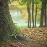 Śliczny i {zadbany ogród to nie lada wyzwanie, w szczególności jak jego konserwacją zajmujemy się sami.